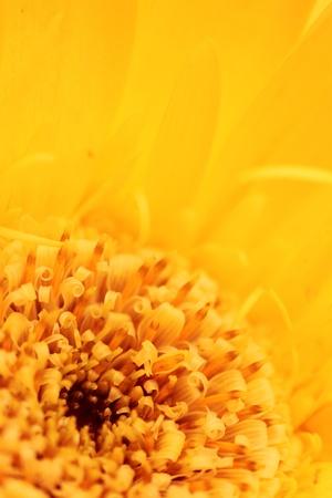 macro photo: Macro photo of yellow flower