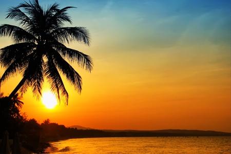 palm tree sunset: Photo of sunrise on sea, Vietnam