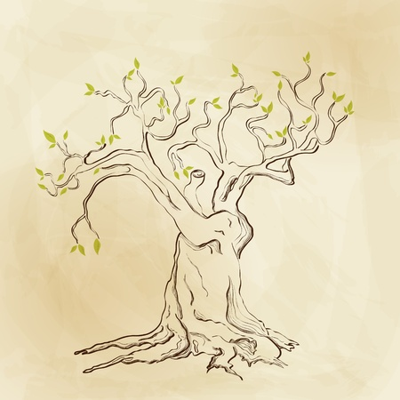 olive tree: Vector hand drawn tree Illustration