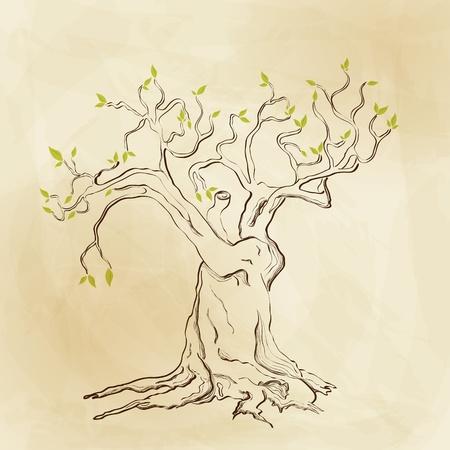 olijf: Vector hand getekende boom