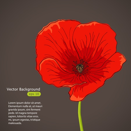 Vector pictures with red poppy flower Vector