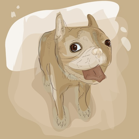Vector illustration of french bulldog Vector