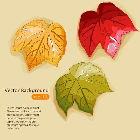 multi coloured: Vector illustration with multi coloured autumn leaves Illustration