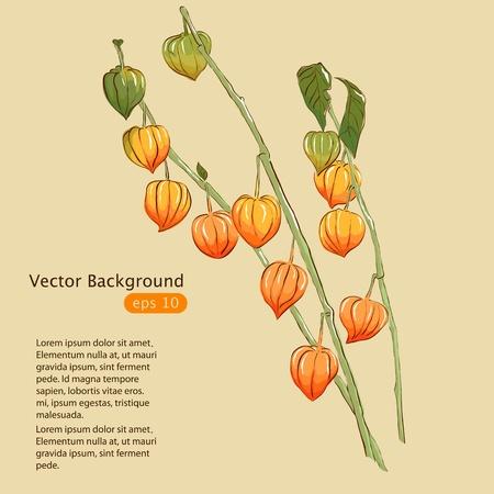 fruit stem: Physalis  Winter cherry