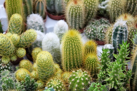 Photo of some cactus Stock Photo - 15736101