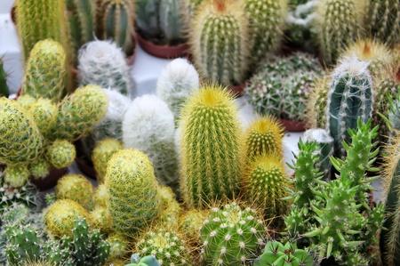 Photo of some cactus Stock Photo - 15736101