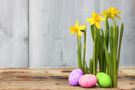 Cute photo with easter eggs and daffodils  photo