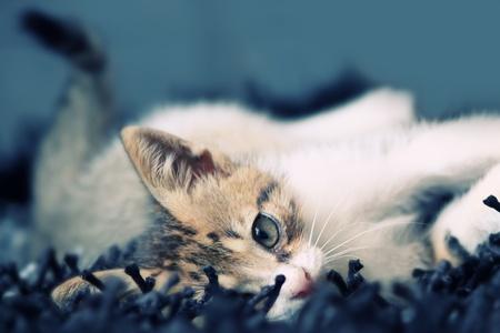 animal photo: Photo of lying kitten Stock Photo