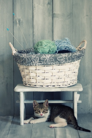 clew: Photo of cute kitten and the basket with wool
