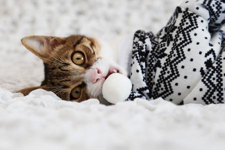 animal photo: Photo of cute cat wearing xmas costume Stock Photo