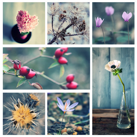 Photo collage of flowers and plants photo