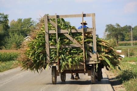amish: Amish Wagon with Corn
