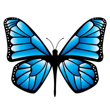 mariposas volando: Mariposa Vectores