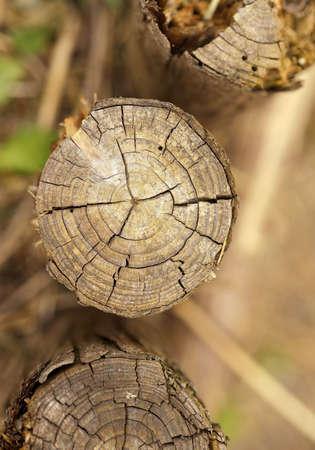 truncated: Small circular stumps Stock Photo