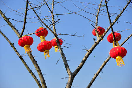 customs and celebrations: Red lanterns hanging on the tree Stock Photo