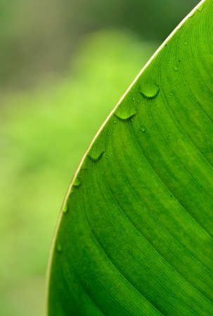 waterdrops: Green leaf with waterdrops Stock Photo