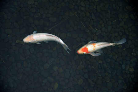 leisurely: Fishes in water