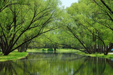 Paisagem, vista, lago, madeiras Foto de archivo - 79626328