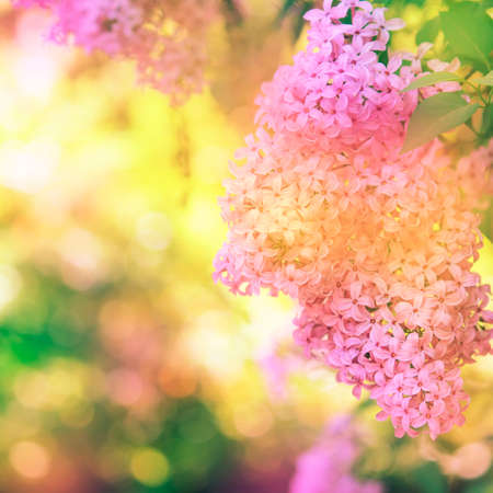 Bright spring natural lilac background, outside nature, soft focus, partially blurred image