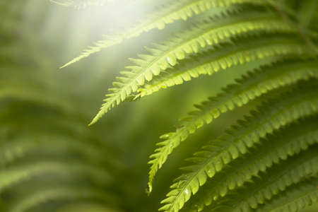 Dark green mysterious spring natural background with white fern leaves, outdoor nature, soft focus, partially blurred image