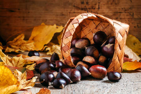 Fresh edible chestnuts spill out of a wicker basket on autumn background with yellow fallen leaves on the old wooden table, selective focus
