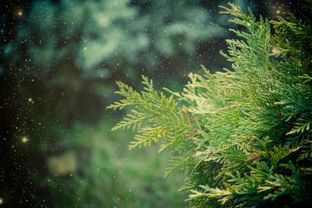 Christmas or New Year's blurred natural background with pine tree and snowflakes painted, selective focus Zdjęcie Seryjne
