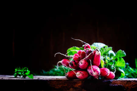 Bunch of dirty radishes with leaves, dug out of the ground, dark wooden background. Low key, selective focus