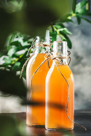 Homemade Fermented Raw Kombucha.Tea Ready to Drink. Gray Kitchen Table Background With Copy Space Reklamní fotografie