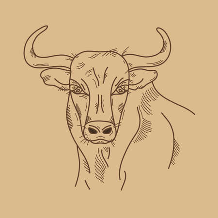 Cow or bull head. Hand drawn sketch in graphic style on brown background. Vintage vector illustration