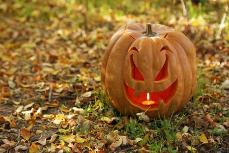 Halloween pumpkin in autumn leaves photo