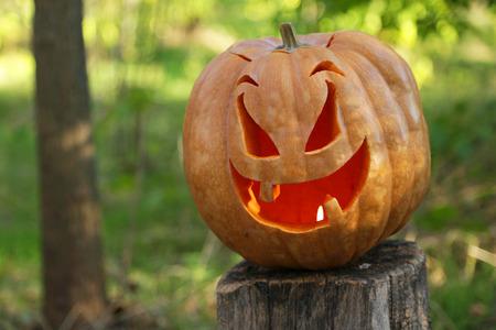 Halloween pumpkin in wood photo