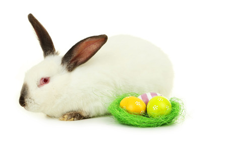 White rabbit with nest and eggs isolated on white photo