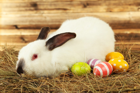 White rabbit in hay with painted eggs on brown wooden background photo