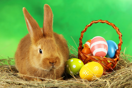 Young red rabbit in hay with eggs on green background photo