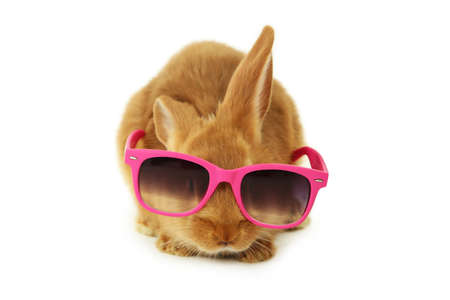 intrigued: Young red rabbit in sun glasses isolated on white Stock Photo