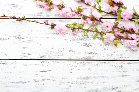 Spring flowering branch on white wooden background photo