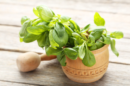 basil: Basil leaves in wooden mortar on grey wooden background