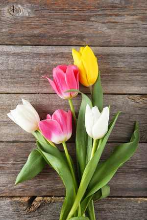 tulipan: Beautiful tulips on grey wooden background