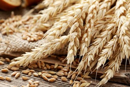 cosecha de trigo: El trigo en el fondo de madera marrón