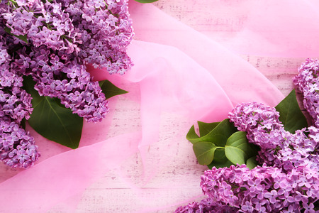 lilac: Beautiful lilac flowers on pink cloth background