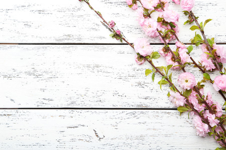 Spring flowering branch on white wooden background Archivio Fotografico