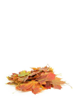 autumn leafs: Autumn leafs isolated on white
