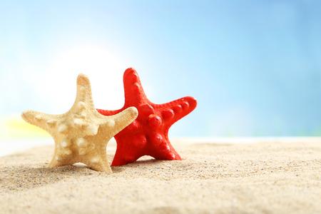 echinoderm: Starfishes on a beach sand Stock Photo