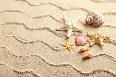 Muscheln am Strand Sand