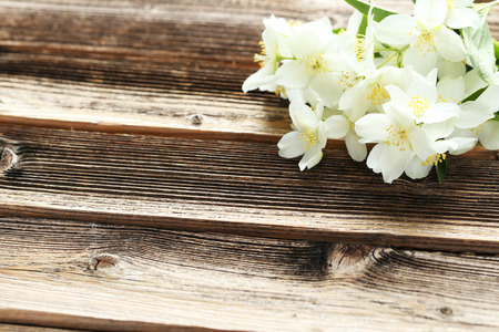 White flowers of jasmine on brown wooden background