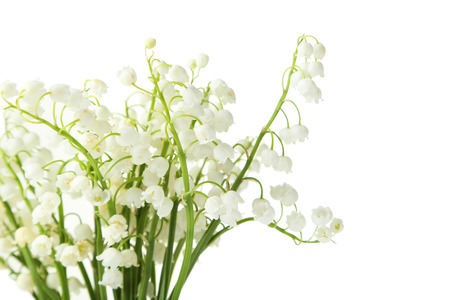 lily of the valley: Lily of the Valley on white background