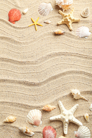 Sea shells on a beach sand Foto de archivo