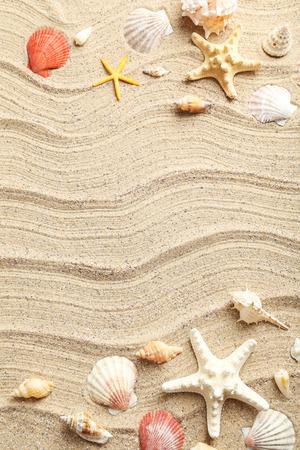 Sea shells on a beach sand Standard-Bild
