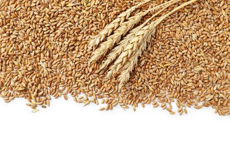 wheat grain: Wheat grains on a white background