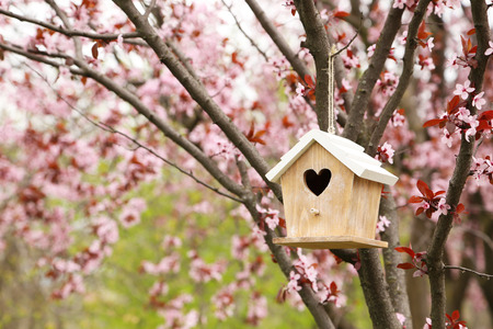 animal nest: Nesting box hanging on the tree